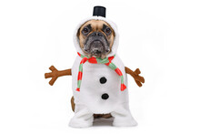 Funny French Bulldog Dog Dress...