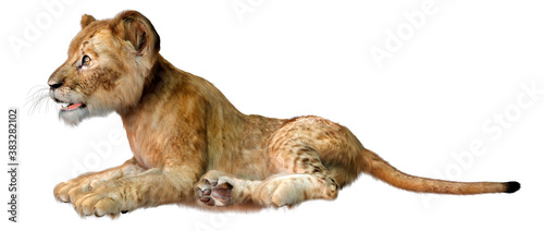 Fotografering 3D Rendering Lion Cub on White