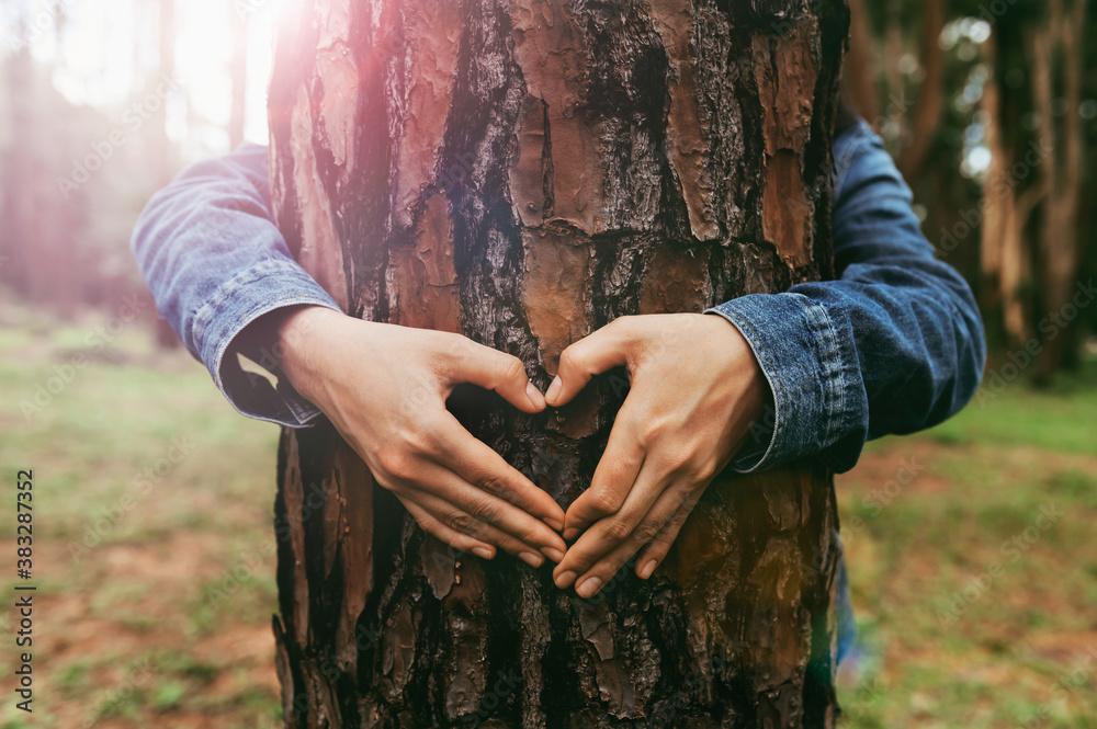 Fototapeta woman hand making heart shape on trunk of tree