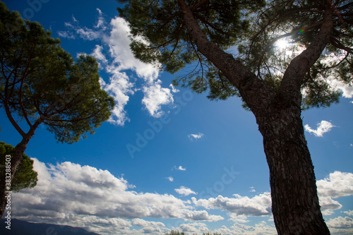 Italy, Tuscany, the country near Florence, tree and clouds.