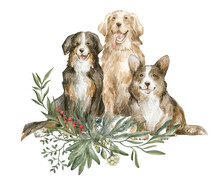 Watercolor Illustration With Cute Dogs And Winter Foliage. Welsh Corgi, Golden Retriever, Bernese Mountain Dog, Pine, Leaves. Winter Set With Home Pet. Cute Christmas Art