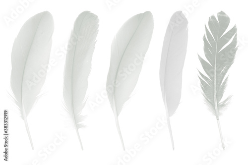 Beautiful collection sketching white feather isolated on white background Fototapet
