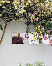White Wall Surrounded By Low Hanging Leaves And Flowers
