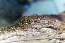 Alligator Is A Crocodile In Th...