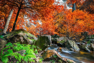 Fototapeta Wodospad Amazing in nature, beautiful waterfall at colorful autumn forest in fall season