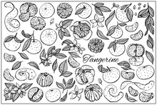 Tangerine Slices And Seeds, Peel, Leaves, Flowers Set. Organic Food, Vector Doodle Hand Drawn Sketch Style Illustrations Collection Isolated On White Background.