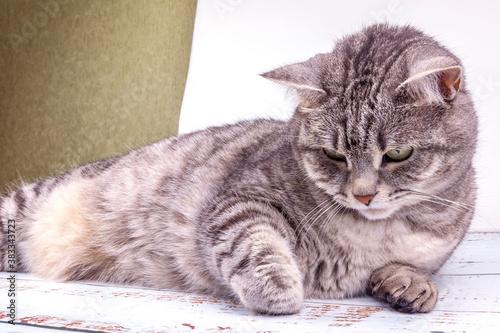 Playfull fluffy cat is sleeping on the sofa Fototapet