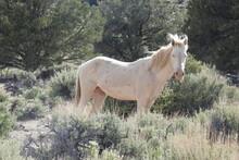 Wild Horse, White Stallion, Le...