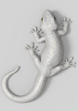 3D Rendering Illustration White Gecko Isolated On White Plain Background