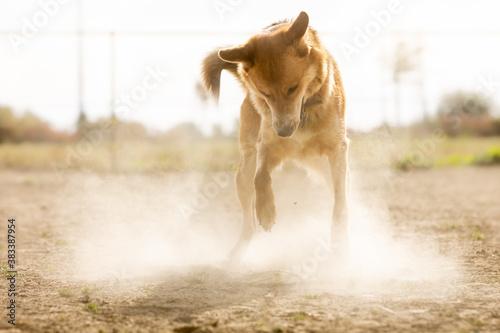 Hund spielt Frisbee im Staub Fotobehang