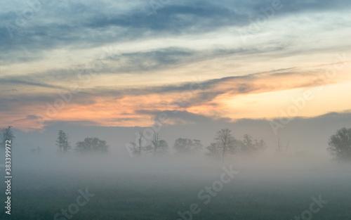 Obraz Jesienne drzewa we mgle - fototapety do salonu
