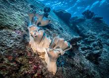 White-pink Sea Sponge Similar ...