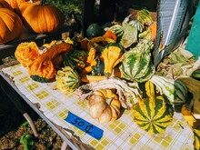 Many Colorful Gourds And Mini ...