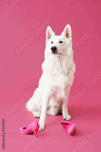 Funny naughty dog with shoes on color background Wallpaper Mural