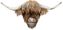 Scottish Highland Cow Head. Ha...