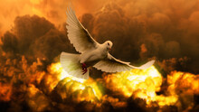 White Dove, War And Peace