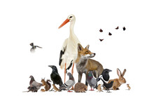 Group Of Many Animals From Eur...