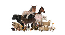 Group Of Many Farm Animals Standing Together