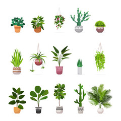 Fototapeta Boks set decorative houseplants planted in ceramic pots different garden potted plants collection isolated vector illustration