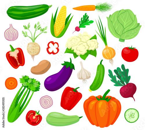 Fotografia, Obraz Vegetables vector illustration set
