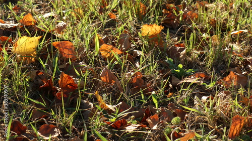 sunny autumn background with fallen leaves in the grass conveying the melancholi Wallpaper Mural