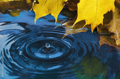 Yellow autumn maple leaf with reflection and drop over wavy water Fotobehang