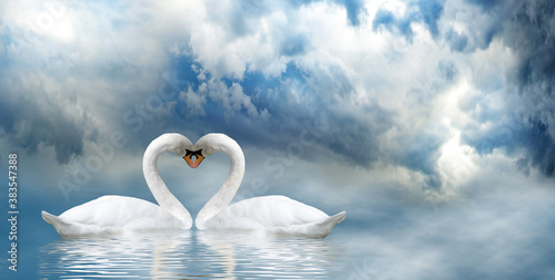 Fototapety, obrazy: Image of two swans on water