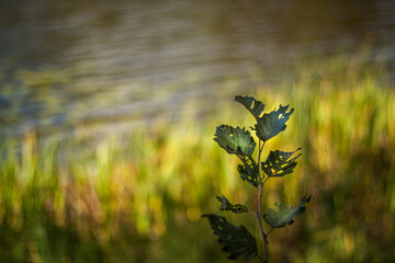 liście i bokeh