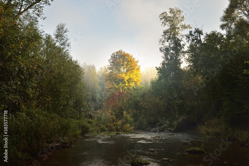River in the forest at sunrise, mighty golden tree close-up. Pure morning sunlight, fog, haze. Atmospheric autumn landscape. Fall season, ecology, environmental conservation #383577718