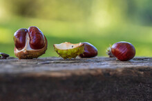 Chestnuts In A Green Container Lie On A Wooden Bench. The Background Is Green With Nice Bokeh.