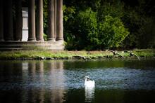 Four Ducks Flying Over The Lake