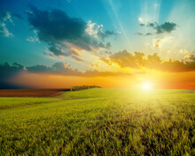 Good Sunset And Green Agricult...