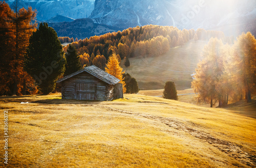 Yellow larches in the sunlight. Location Dolomite alps, Alpe di Siusi, Italy, Europe.