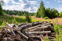 Broken Old Cut Tree Logs Piled...