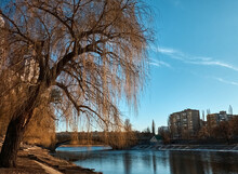 Bald Willow Leaned Over The Ri...