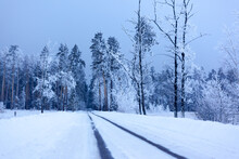 The Road Goes Into The Winter ...