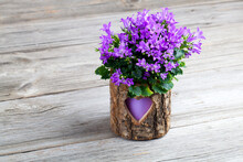 Blue Campanula Flowers Wooden ...