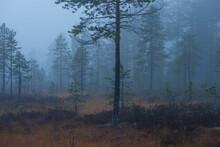 Wetland In Foggy Rainy Evening