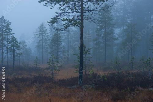 Wetland in foggy rainy evening Fotobehang