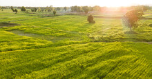 Landscape Green Rice Field In ...