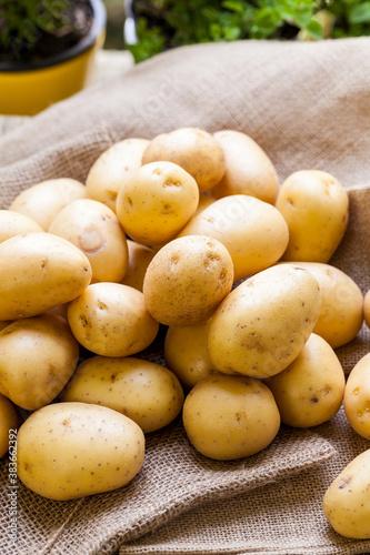Farm fresh  potatoes on a hessian sack