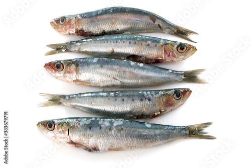 Fototapeta fresh sardine obraz