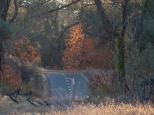 Jedediah Smith Memorial Trail In Autumn