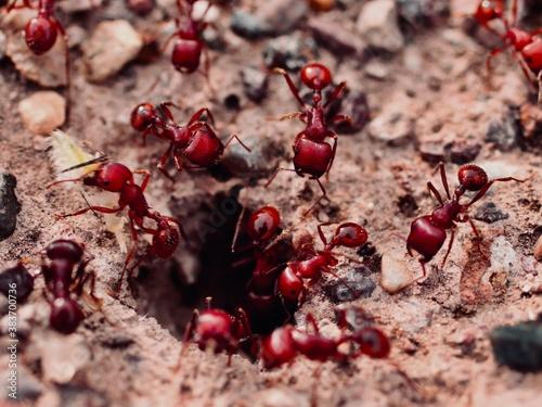 Cuadros en Lienzo Ants