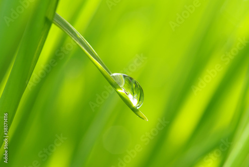 Fototapeta drop on grass