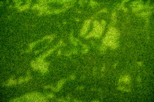 Green Fields With Shade Of Trees. The Shadow Leaves Fall From The Tree On The Green Grass