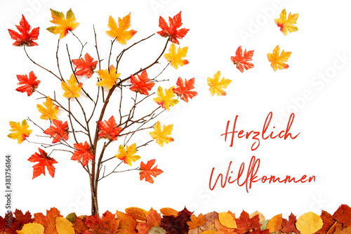Fototapeta Branches Building Tree With Bright Colorful Leaf Decoration. Red And Yellow Leaves Flying Away Due To Wind. German Text Herzlich Willkommen Means Welcome. White Background obraz