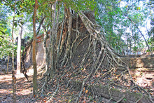 The Wall Of The Ancient Preah Khan Temple Entwined With Tree Roots. Angkor, Cambodia