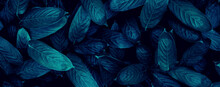 Closeup Tropical Blue Leaf Bac...