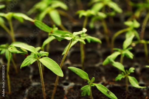 Plant propagation.